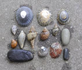 Shells#2