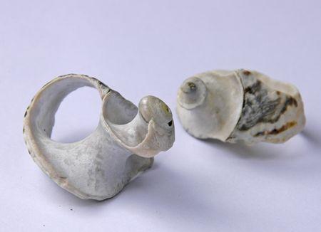 Shell rings 1