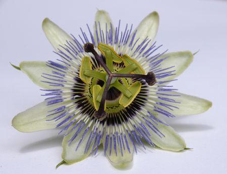 Flower 2